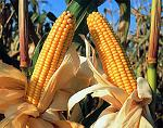 Leyenda del maiz