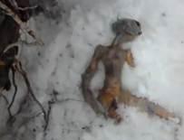 Leyenda del extraterrestre que apareció muerto en Rusia